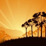 sunrise-in-savanna
